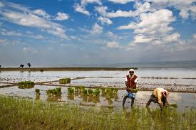 Bangladesh's farm credit grows by 16% in H1 of FY 14