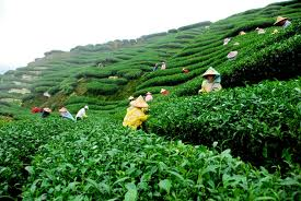 Bangladesh's tea growers seek 20% tax on import