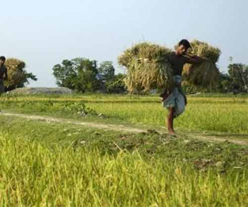 Bangladesh's farm credits disbursement up 23% in Q1