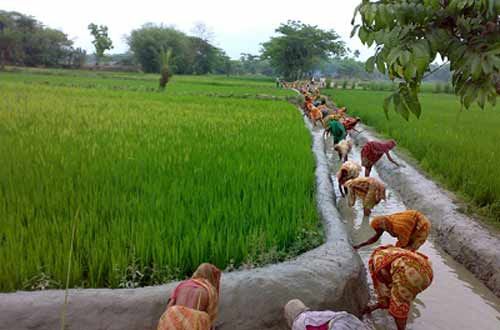 Bangladesh's banks to disburse BDT175.50bn agro-credit in FY 17