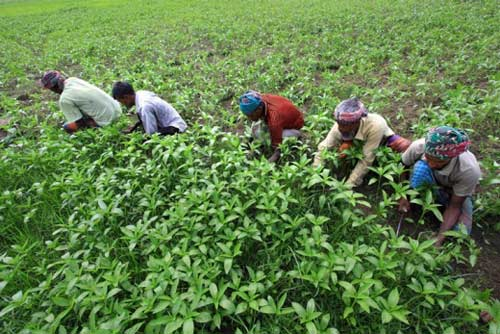 World Bank provides $200mn to improve rural population in Bangladesh