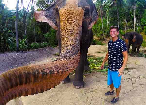 Elephant snatches camera, takes 'elphie'