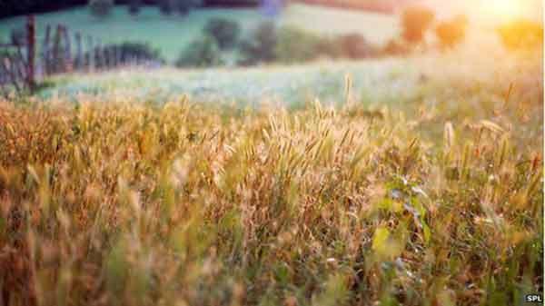Organic farming 'benefits biodiversity'