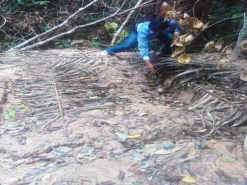 2nd Thai jungle contains more bodies: Villagers