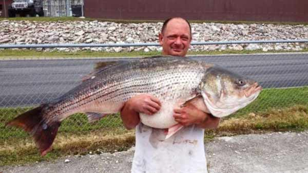 Missouri fisherman found record-setting 65-pound fish
