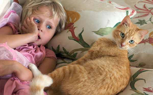 Do you know, cats can make kids stupid!