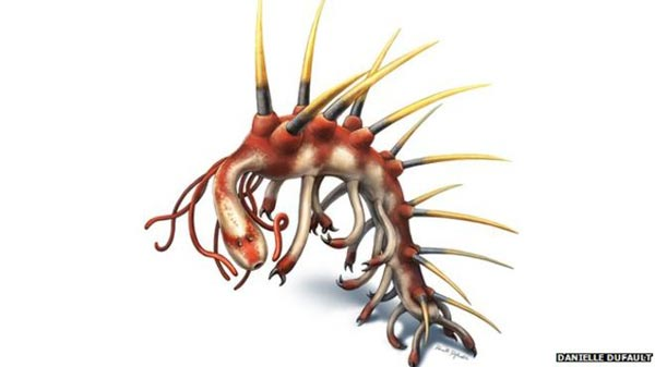 Face of bizarre sea creature revealed