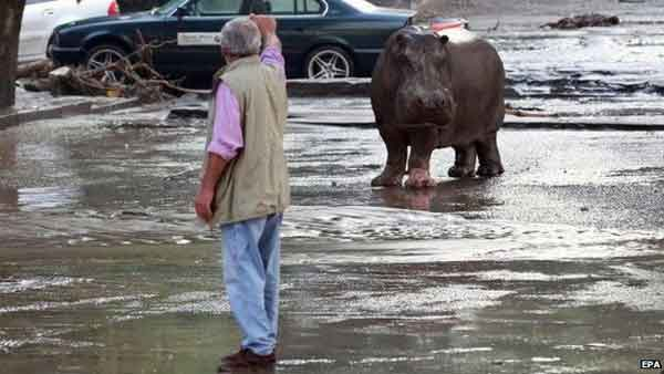 Alert as zoo animals escape in flood
