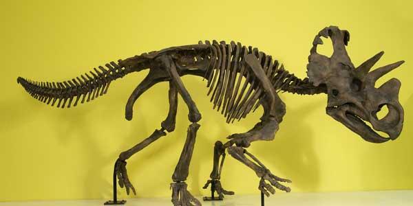 20ft horned dino discovered