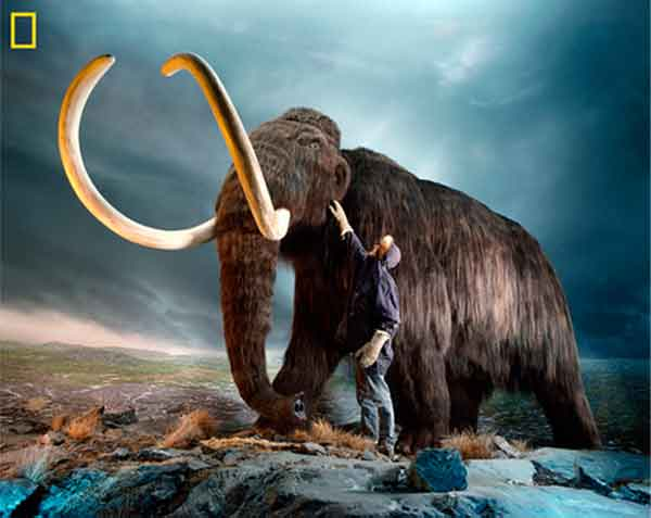 How climate change may have killed the mammoth