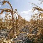 Global warming increases 'food shocks' threat