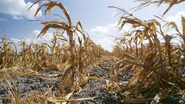 Global warming increases 'food shocks' threat