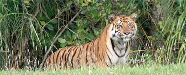 6 tiger poachers shot dead in Bangladesh