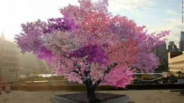 Trees that can bear 40 types of fruit!