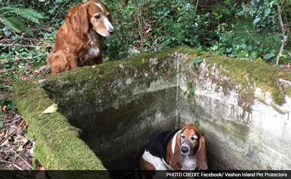Dog stays by trapped friend's side for a week until rescue