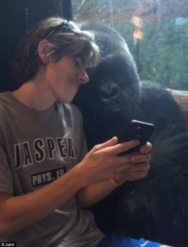 Gorillas like photos too!