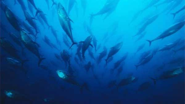 Marine population halved since 1970: Report