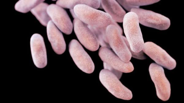 Fears grow over increased antibiotic resistance