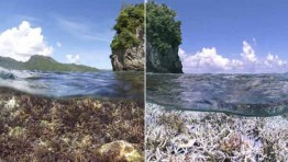 World's corals threatened by bleaching