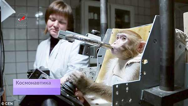 Russia are preparing monkeys for space travel to Mars