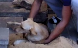 Dog rescued in Russia after being buried alive for two days