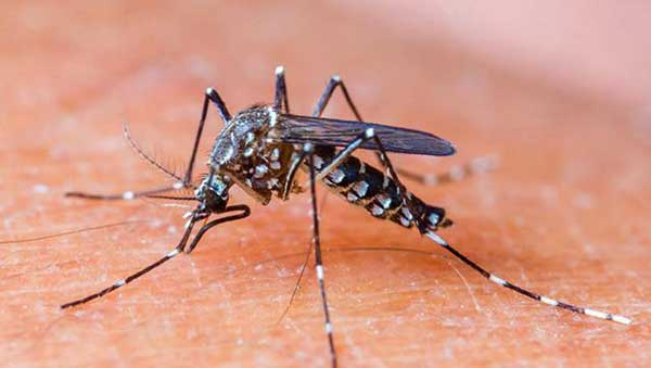 Malaria killed more than dengue