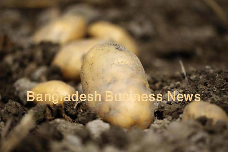 MSU to lead $5.8M USAID grant to improve Bangladesh potato production