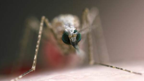 Scientists find key to malaria growth