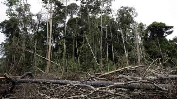 COP21: Prince Charles to call for forest protection