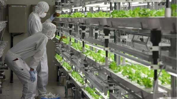 Can growing lettuces in the cloud help feed the world?