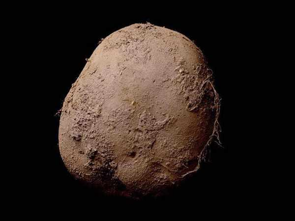 Businessman buys photograph of a potato for €1m