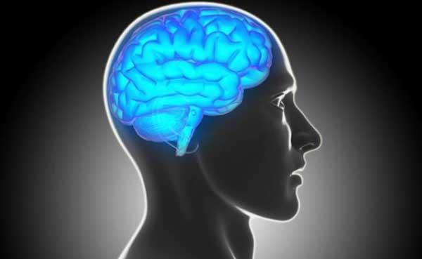 3D mini-brains developed in a US lab