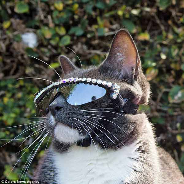 Cat becomes star because she wear sunglasses for eye problem