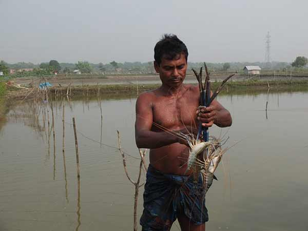 Bangladesh shrimp farmers facing life on the edge