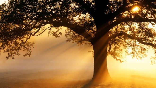'Wrong type of trees' boost warming