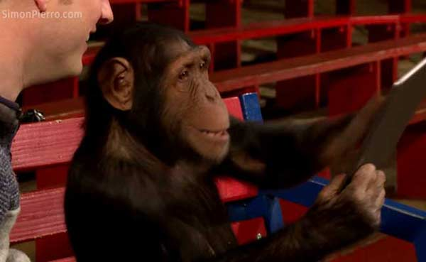 Chimpanzees reacts to iPad magic is the cutest thing ever