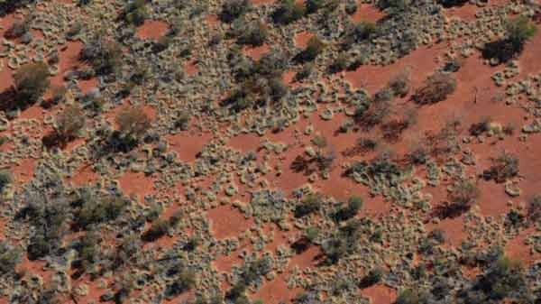 Australia 'fairy circles' shed light on mystery