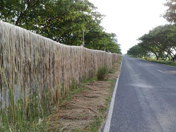 Raw jute prices may stabilise as Bangladesh lifts export ban