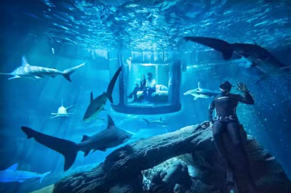 Sleep with the sharks, Airbnb offers