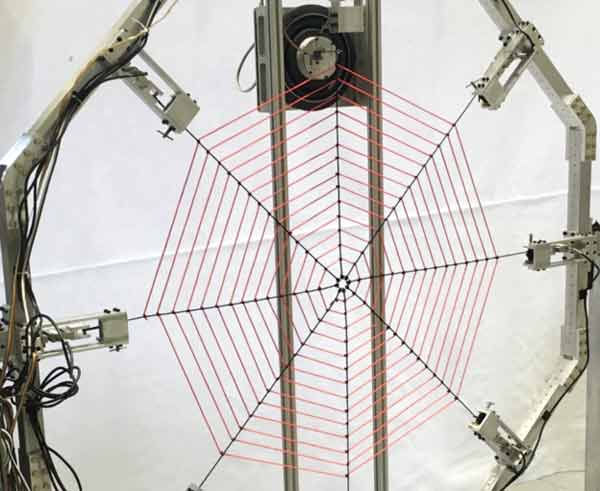 Giant web probes spider's sense of vibration