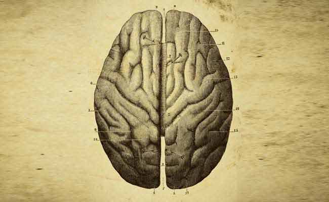 Brain injury linked to stiffened arteries: Study