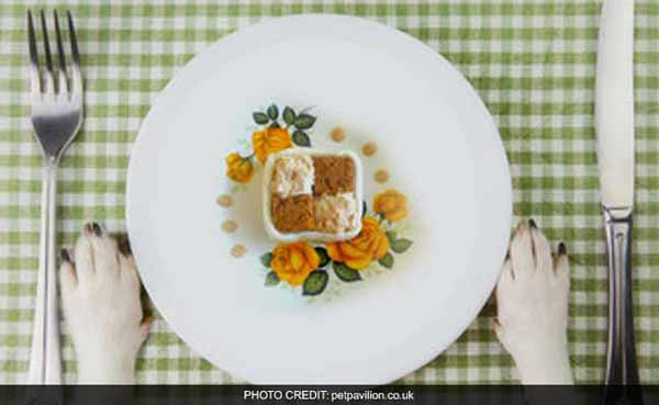 Three-course restaurant brunch for dogs in UK