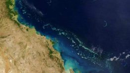 Bleaching 'killing Great Barrier Reef'