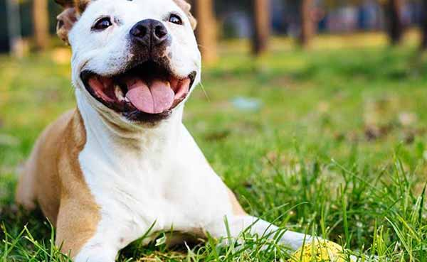 Dogs can provide clues about human brain tumour: Study