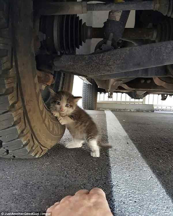 Touching moment man found a petrified kitten hiding under a truck