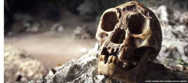 Fossils show Hobbits shrank 'rapidly'