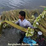 Water lily in Bangladesh