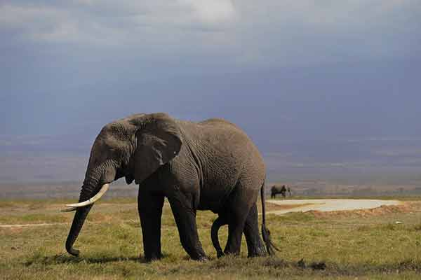 China in 'historic' ivory trade ban