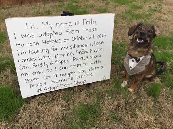 Sharp-dressed rescue dog plans reunion with siblings