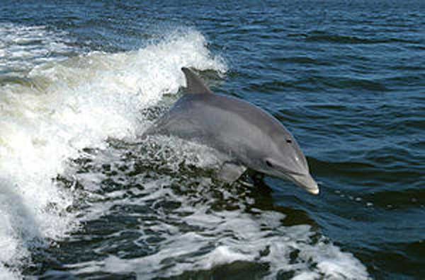 Dolphins escape from Taiji facility
